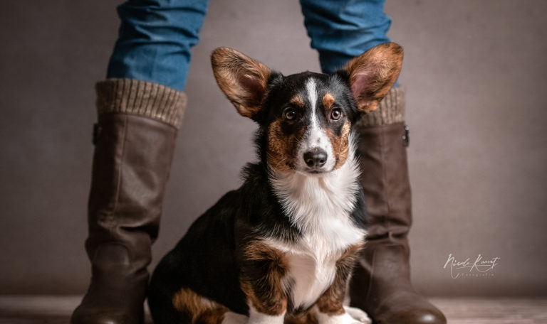 Hundeschule einzelunterricht