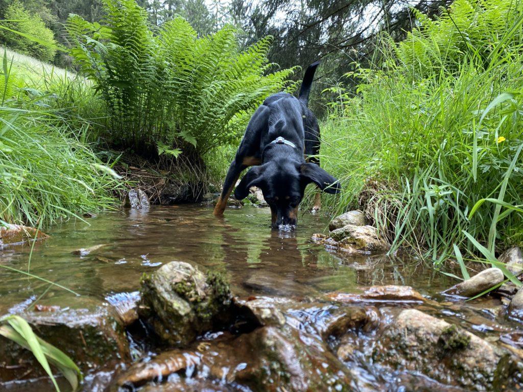 Afra spielt mit dem Wasser